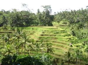 Gambar 2. Ladang